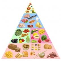qida piramidası