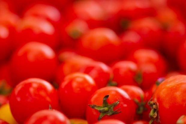 La Tomatina – pomidor döyüşü