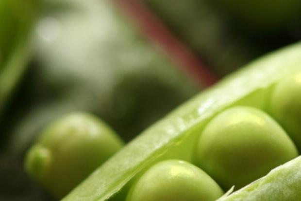 Зелен грах – храна на кралете