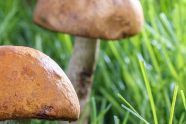 Великая сила грибов