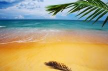 Золотий пісок під гілкою пальми на березі моря та небо вдалині