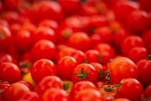 Червоні помідори на передньому плані