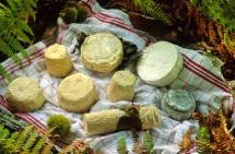 Всі види сиру викладені на рушнику на землі серед трави