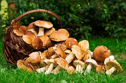 Кошик грибів на природі на траві