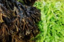 Фон із морських водоростей для салатів