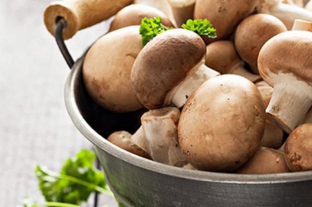 Декілька нових провідних ідей щодо грибів цієї осені