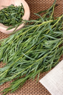 Свіжа трава базиліку з поля